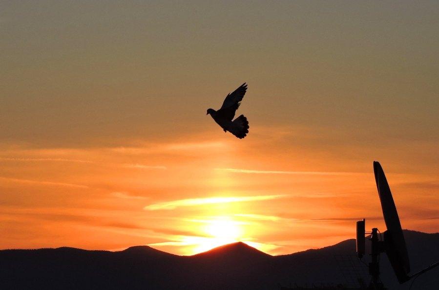 In volo all'alba