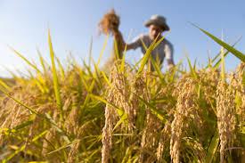 """Voucher in agricoltura, Bartolini: """"Serve uno strumento più immediato e semplice"""""""