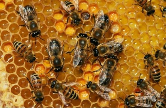 """""""Melissa, le api ed il grembo della Dea. Messaggi trascendentali da una cella di alveare""""."""