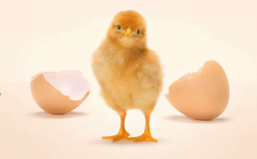 """Le uova in guscio a marchio Coop prima filiera """"cruelty free"""" in Italia"""
