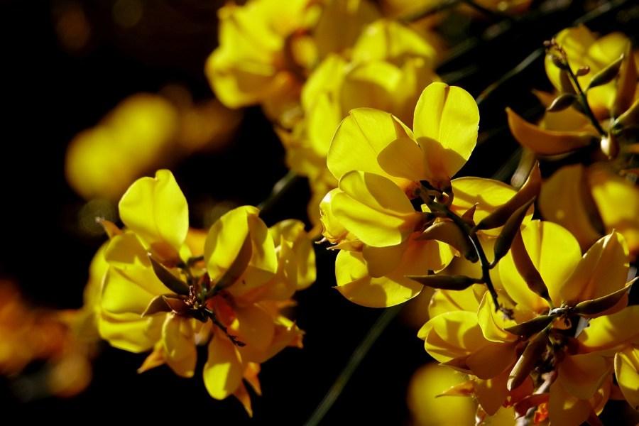 Al Museo del Fiore un maggio nella natura fra trekking, orchidee e incontri di entomologia