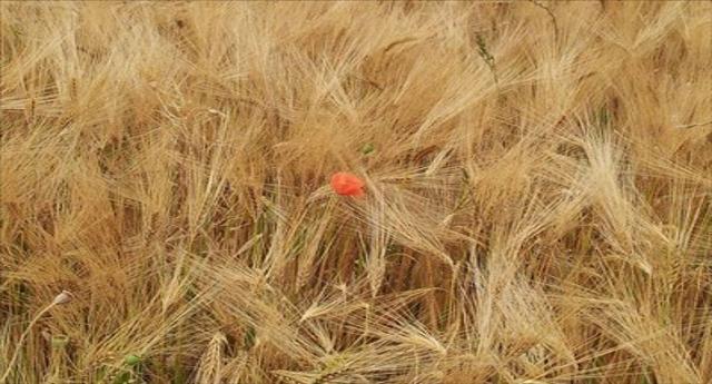 Ripercorsi 70 anni dell'Agro Pontino in un convegno a Latina, intervento dell'Unitus di Viterbo
