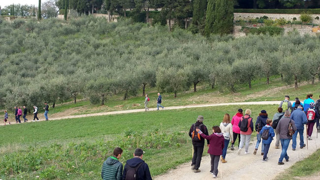 "A Castel Viscardo ""Camminata tra gli olivi"""