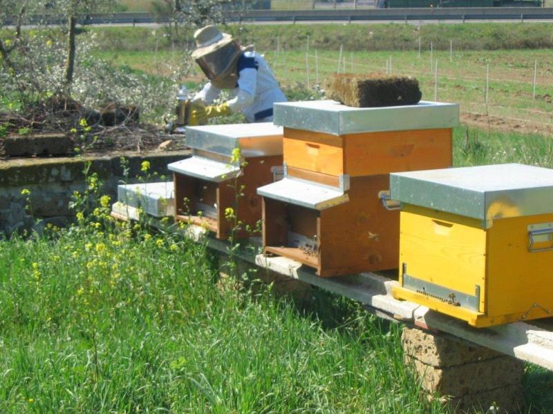 ApisticaMente parlando, al via i seminari di apicoltura all'Unitus