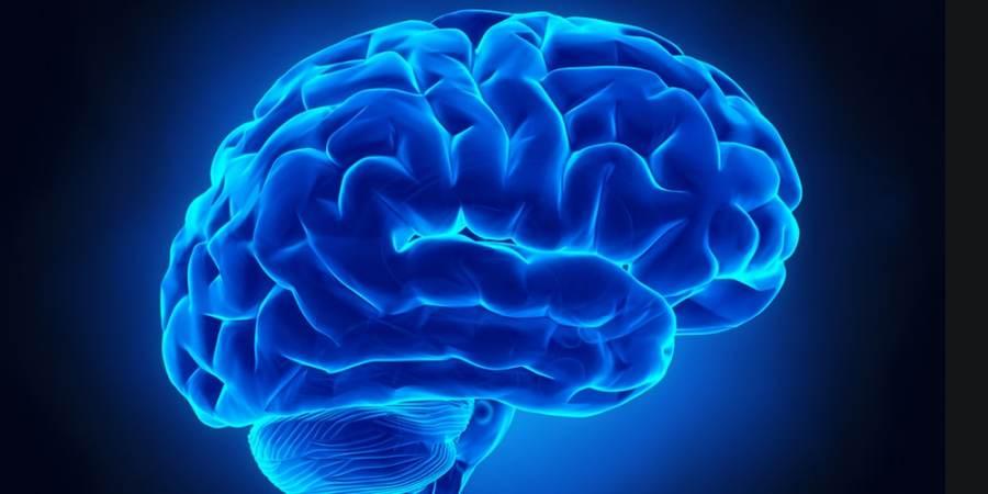 """All'UniTus sintetizzata una moleca che """"ringiovanisce"""" il cervello degli anziani"""