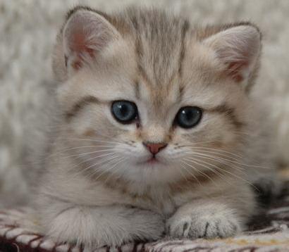 Фото котята