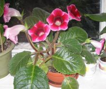 Фото Комнатные цветы