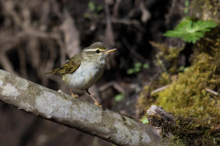 멸종위기종으로 지정된 새의 모습