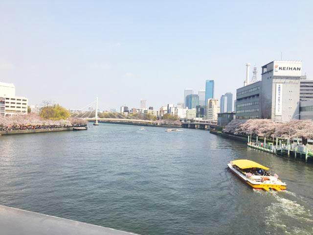 桜の花見,天満橋,大川,船