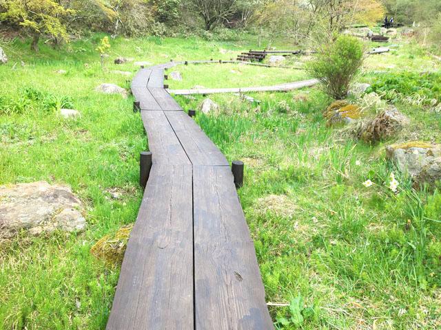 六甲山,せせらぎの散策路,六甲オルゴールミュージアムから六甲高山植物園の小道,