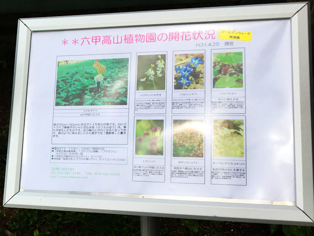 六甲ガーデンテラス,六甲高山植物園の開花状況,