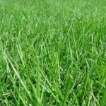 隣の芝生は青く見える!輸出?輸入?投資?せどり辞めて何をしますか?