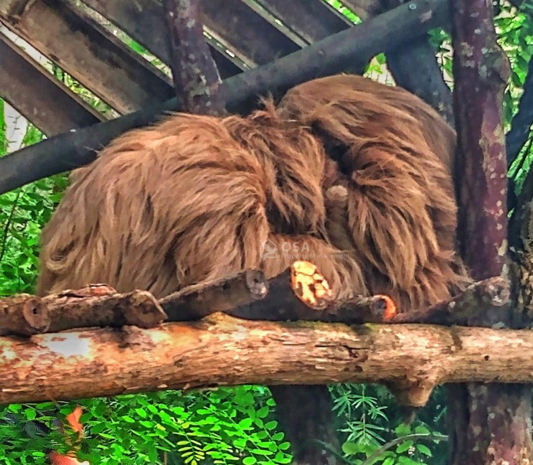 Alturas wildlife sanctuary tour sloths