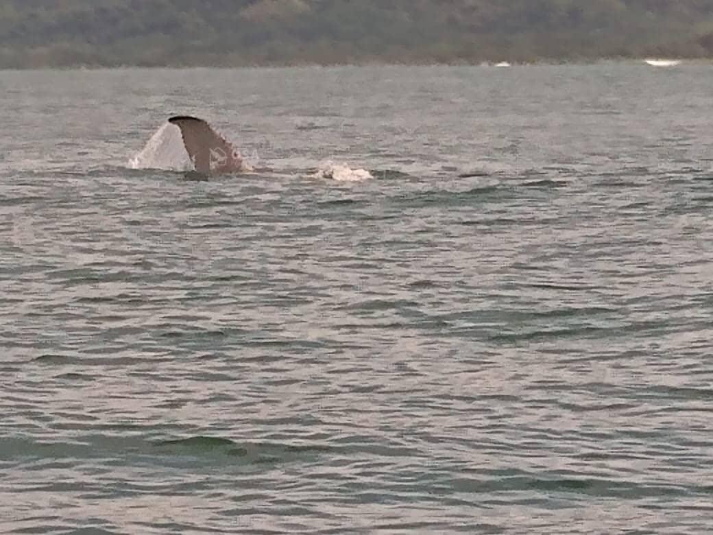uvita whale watching tour