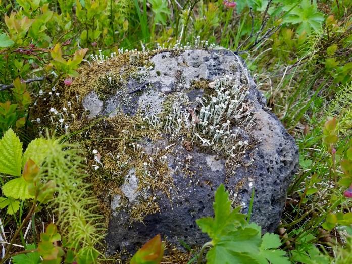 """What I call, """"fairy moss"""""""