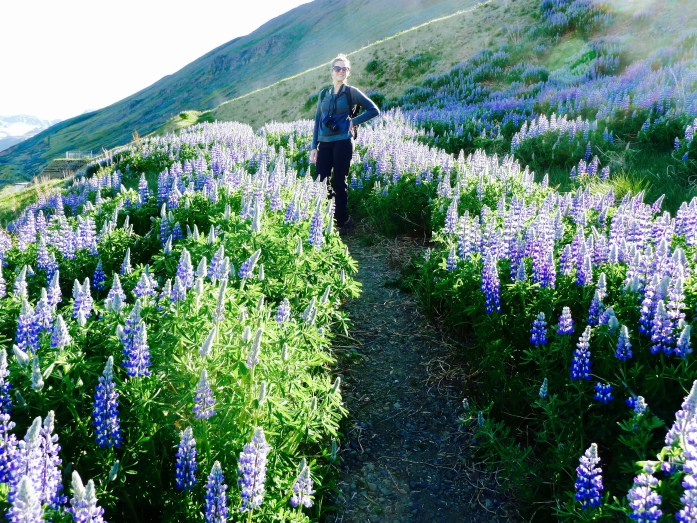 The Lupine was EVERYWHERE.