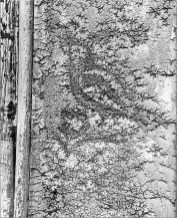 El pájaro canta aunque la rama cruja (Díaz Mirón). 1960