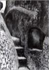 Ventana al coro. 1934-36