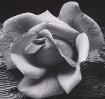 ansel adams PENEWSO6-famed-nature-photographer-ansel-adams-wor