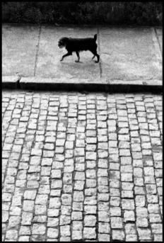 BRAZIL. Rio de Janeiro. 1972.Elliott Erwitt