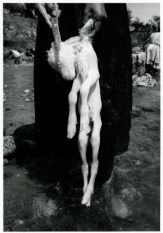 Graciela Iturbide sacrificio
