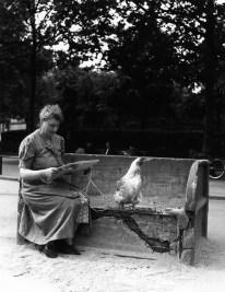 La poule en laisse Robert Doisneau