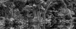Rio Jau Etat d'Amazonas Bresil 2019 ? Sebastiao SALGADO