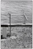USA. Florida Keys. 1968.Elliott Erwitt