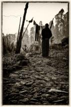 "Susan Kessler, de la serie ""Darjeeling Tea Estate"""