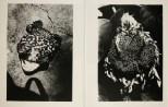 Daido Moriyama, Fragments_304