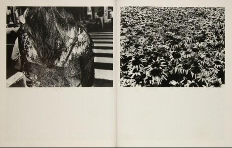 Daido Moriyama, Fragments_310
