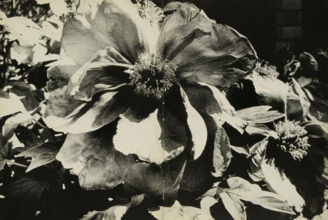 Daido Moriyama, light and shadow_58