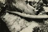 Daido Moriyama, light and shadow_88