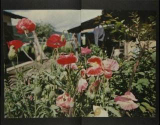 Daido Moriyama, Tales of Tohno_327
