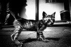 Daido_Moriyama_oenf_43