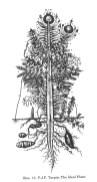"""Goethe Urfplanze: La """"planta original"""" es un término de Goethe, en el contexto de sus estudios botánicos."""