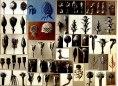 working_collage_karl_blossfeldt_6