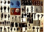 working_collage_karl_blossfeldt_6