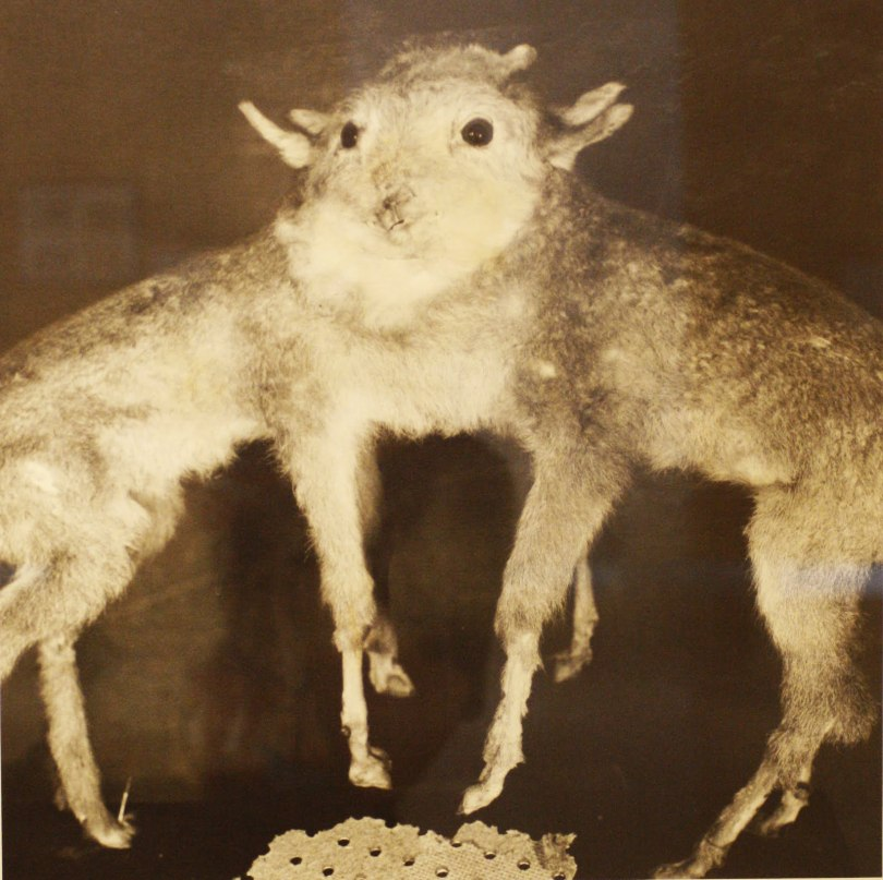 Fauna, Joan Fontcuberta