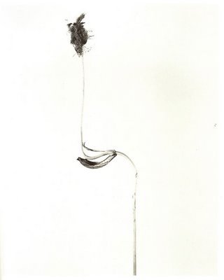Herbarium, Joan Fontcuberta