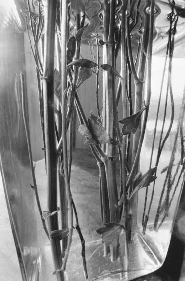 "Lee Friedlander. De la serie ""Stems"", 1999"