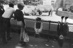 Warri_Winogrand_New York, 1961_zoo_17