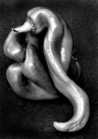 Dennis Weiser. Salute to Edward Weston