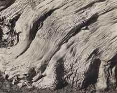 Point Lobos, por Edward Weston