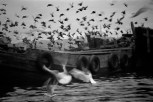 TURKEY. 1955. Barges and birds in the Golden Horn.