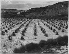 Ansel_Adams_-_National_Archives_79-AA-R02