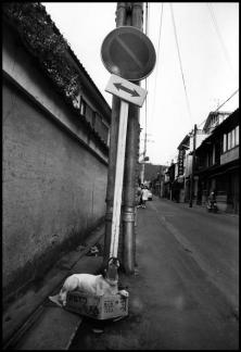 JAPAN. Kyoto. 1970.Elliott Erwitt