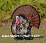 Site Image - Osceola Turkey Hunts