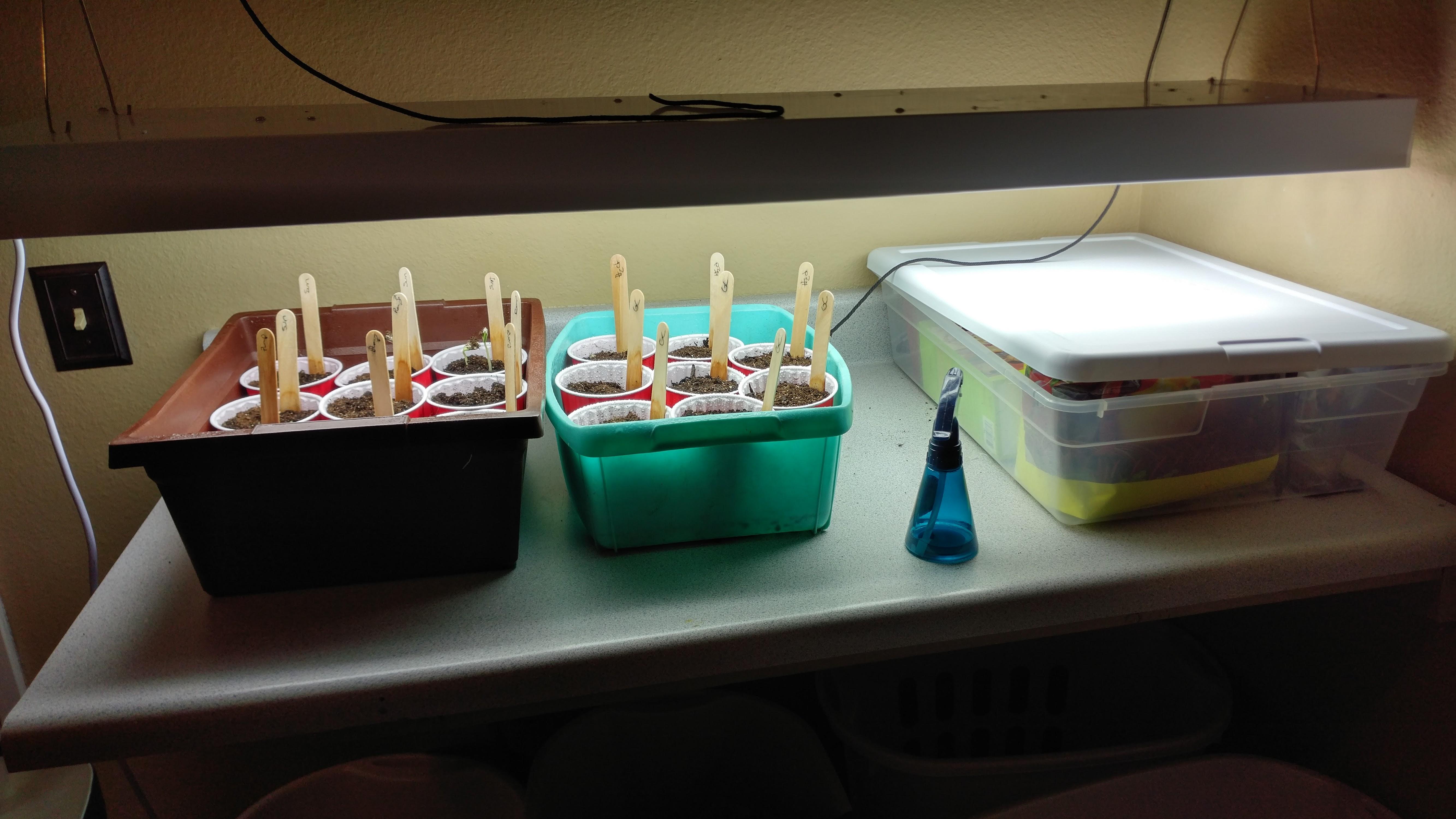 Indoor Seed Starting Resources