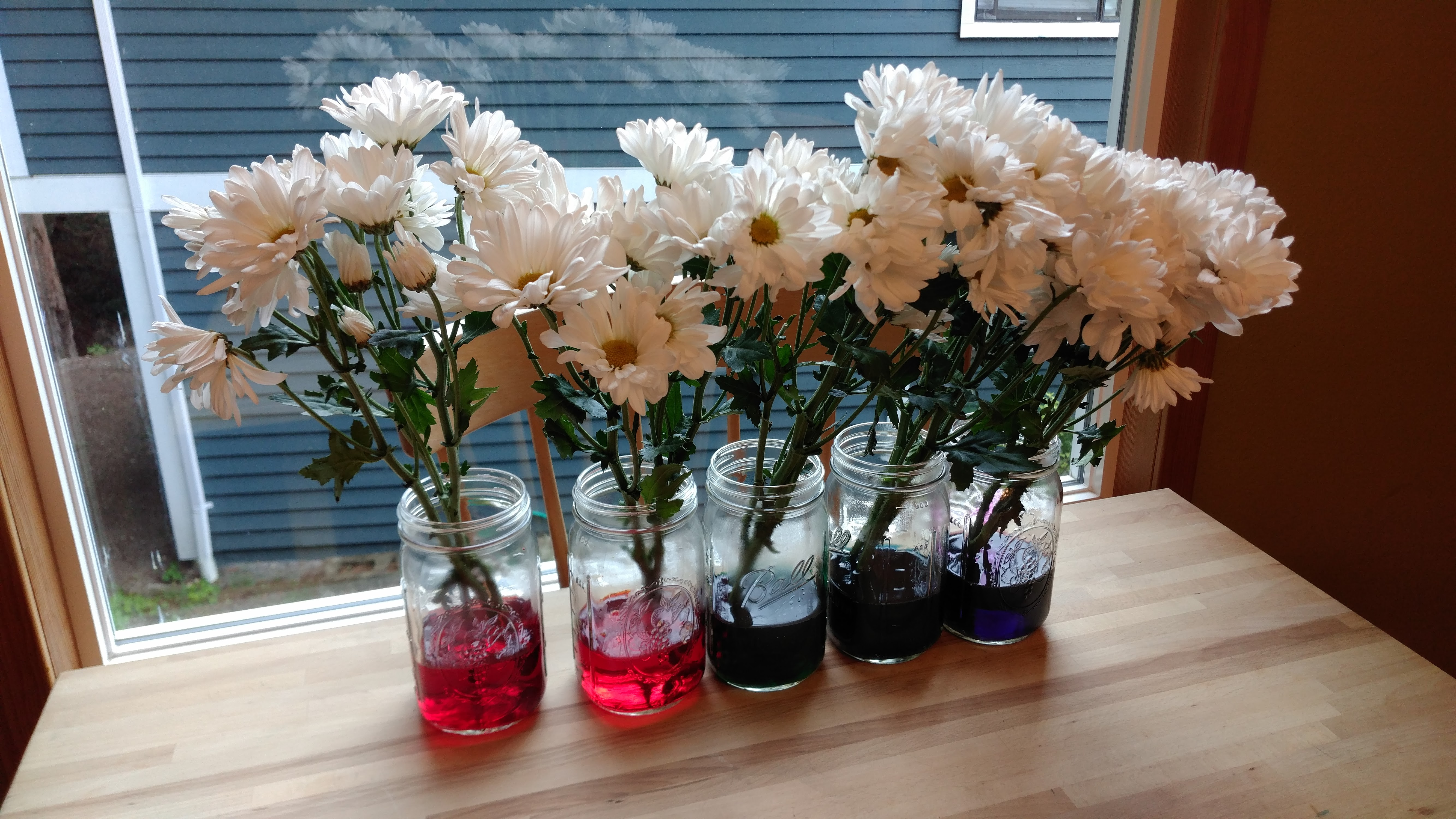 Easy Rainbow Flowers Science Activity